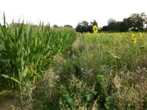 RüSa 2012 in der Grafschaft