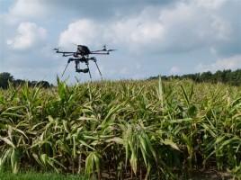 Der Hexakopter im Einsatz über einem Maisfeld, Foto: Christiane Adam