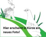 Mehr als 530 000 Euro für die Artenvielfalt – Biotop-Fonds für das Emsland und die Grafschaft Bentheim zieht Zwischenbilanz